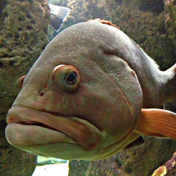 irakleio-aquarium